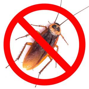 Dezinsekce a hubení hmyzu