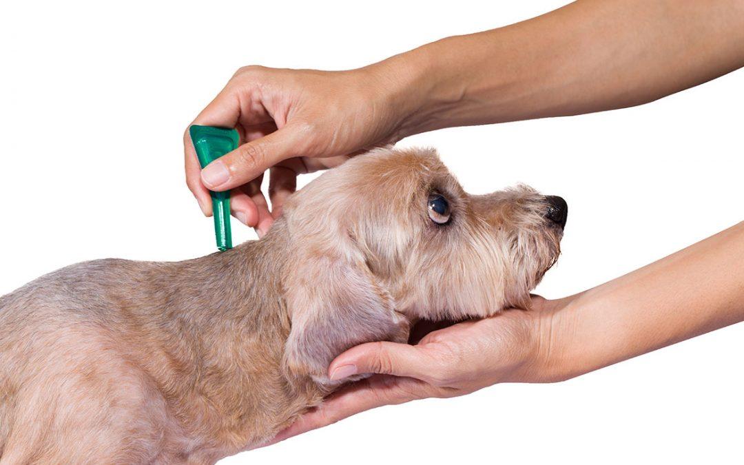 Jak postupovat při hubení a likvidaci blech u psa nebo kočky