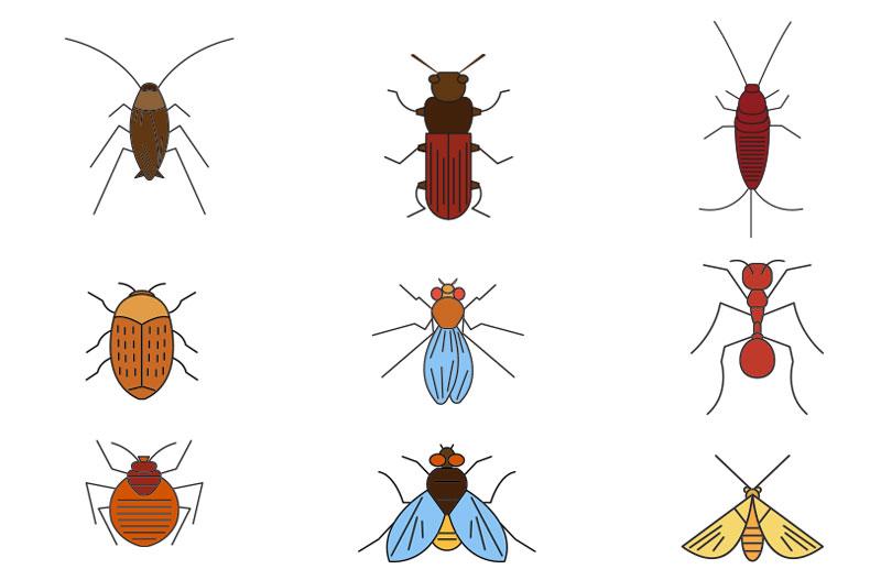 Skoncujte s hmyzem ve vašem bytě. Ekologicky bez použití insekticidů