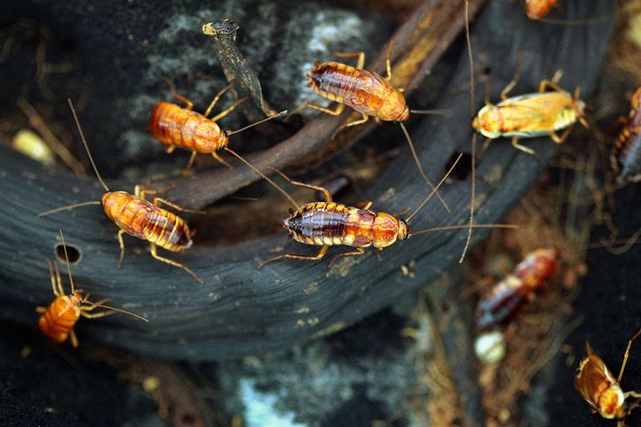 Co je dezinsekce? Metody a druhy hubení hmyzu