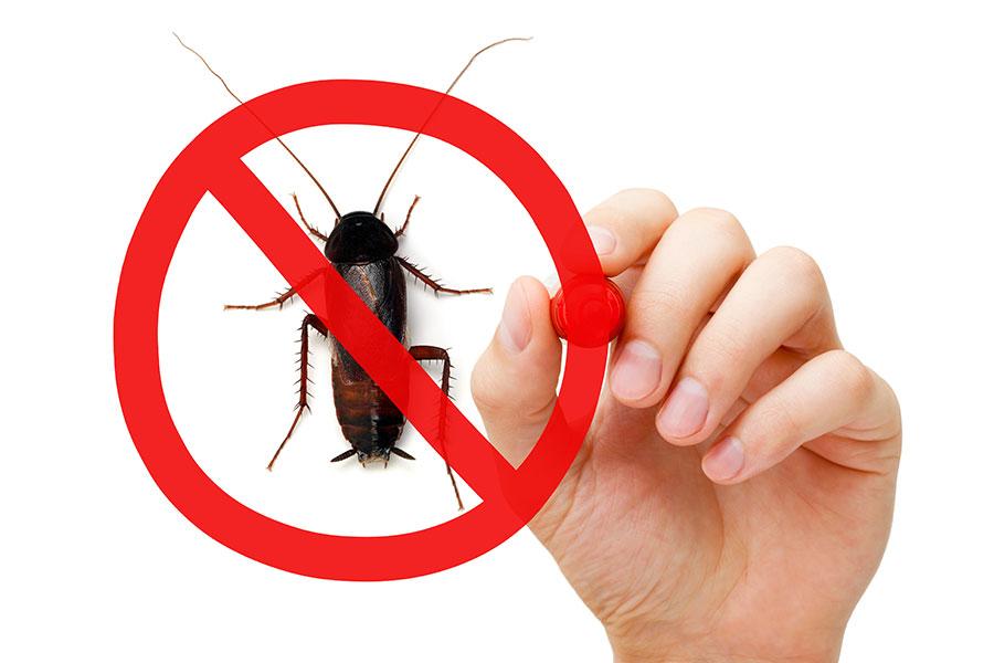 Tito škůdci mohou být vaši nepřátelé v boji proti alergii a astma.