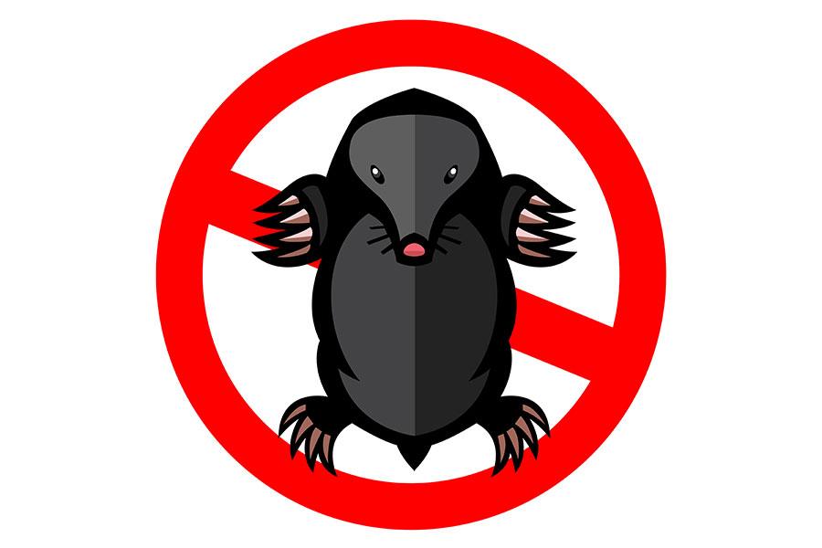 Likvidace krtka je zakázaná! Je chráněný zákonem