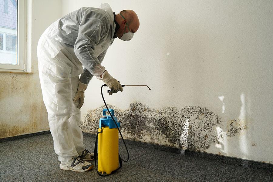 Odstranění plísně ze zdi pomocí odborník