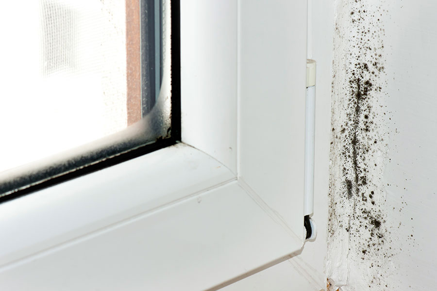 Odstranění plísně ze zdi pomocí chemie - dezinfekce